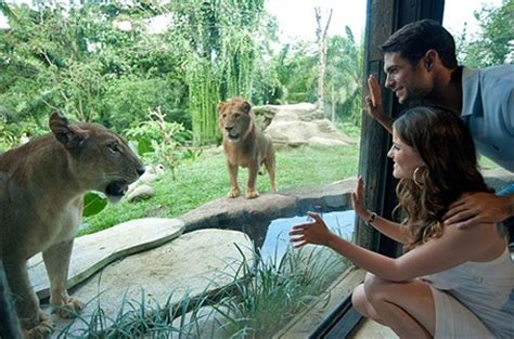 Bali Zoo Zoo With Lunch A Child visit bali zoo adventure tour things to do in bali