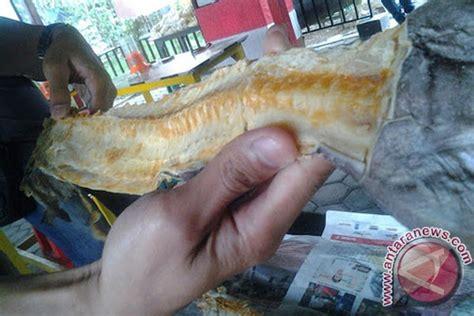 Limbah Roti Pakan Ternak tulang jambal roti awalnya limbah kini jadi rebutan