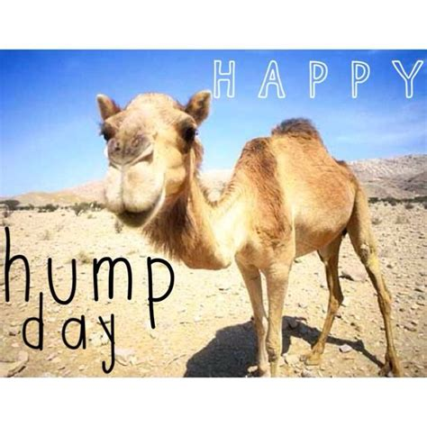 Happy Hump Day Memes - happy hump day meme image quotesbae