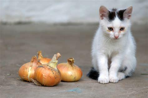 alimenti velenosi per cani 11 alimenti comuni tossici per i nostri gatti