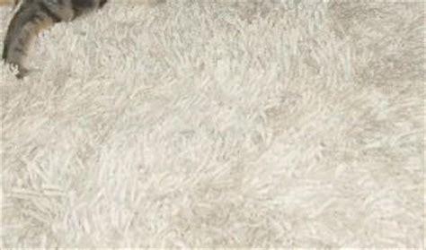 katze pinkelt plötzlich auf teppich wenn die katze durchfall hat und der hund auf den teppich