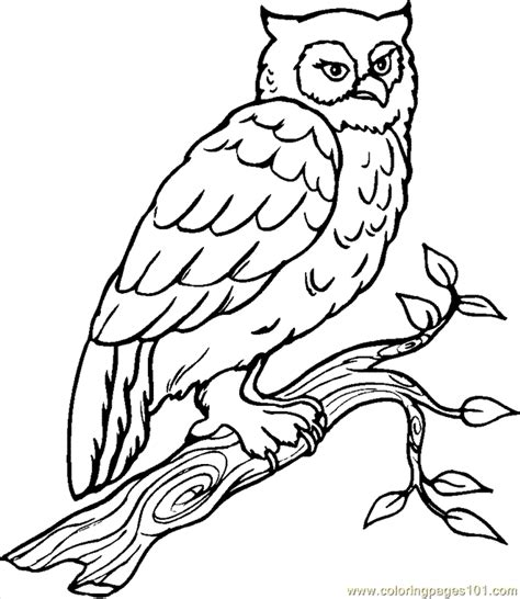 snowy owl coloring pages coloring home