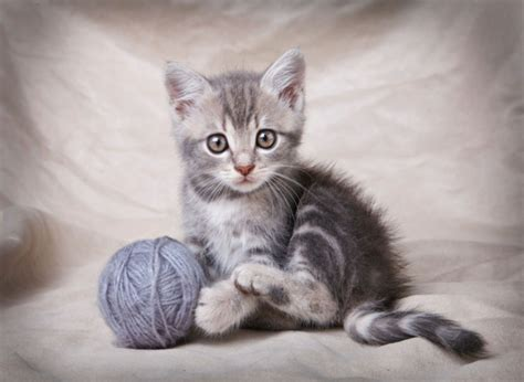 regarder oscar et le monde des chats regarder streaming vf en france des chats mignons pour lutter contre le cancer top sant 233