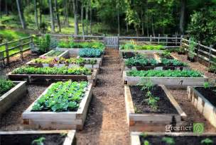 Brisbane Fruit Trees - three key benefits of gardening in raised beds growing a greener world 174