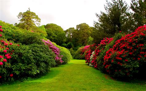 Flower Gardens by Flower Garden Wallpapers Hd Wallpapers Beautiful Flowers Gardens Plants And