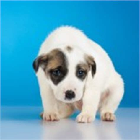 puppy temperament test the most important things to consider when temperament testing a puppy