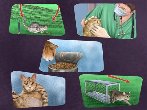 stray cat and kittens in backyard stray cat and kittens in backyard 28 images stray cat
