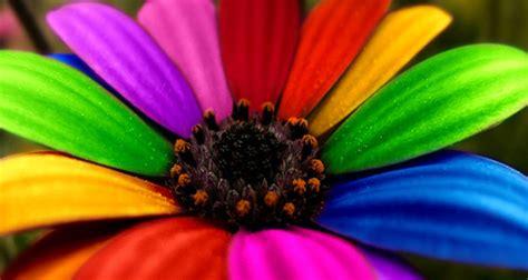 imagenes alegres y coloridas aos olhos da alma segunda feira colorida com a menina