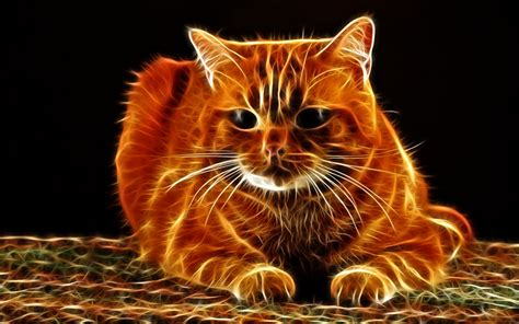 picture cats  graphics whiskers snout animals staring