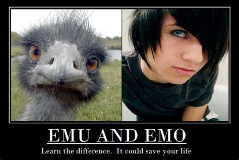 Emo Memes - emo hitler meme newhairstylesformen2014 com