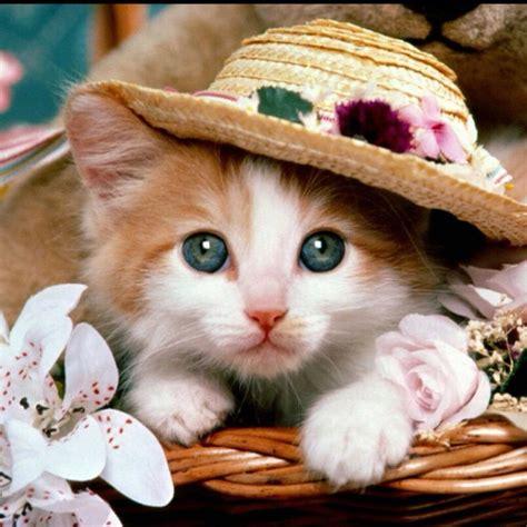 i love cats cute cat kitten pictures cute cat かわいい動物 kawai doubutsu twitter