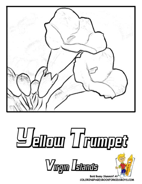 yellow elder coloring page usa flower coloring pages penn wyoming usa islands