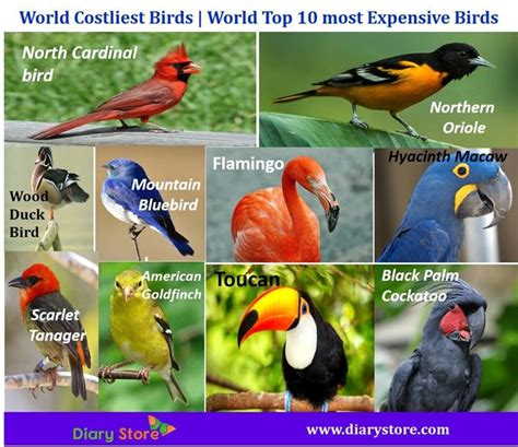 list of 20 most expensive birds world costliest birds world top 10 most expensive birds diary store