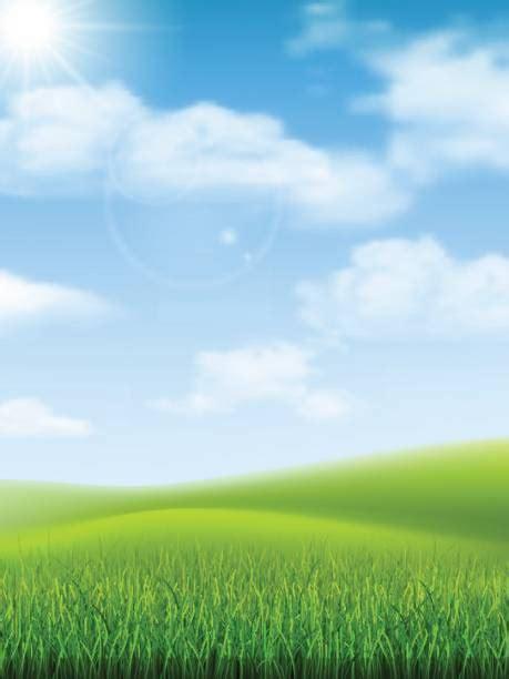 grass field illustrations royalty  vector