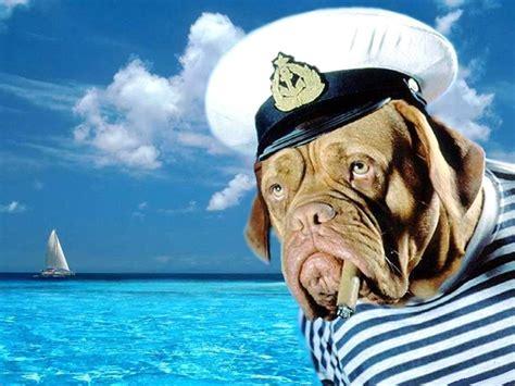 sea dogs sea