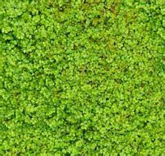 garden moss indoors lush green groundcover beginner