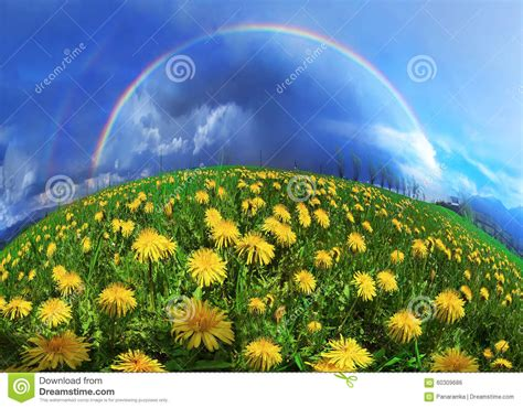 fiori della primavera fiori della primavera e di estate della radura fotografia