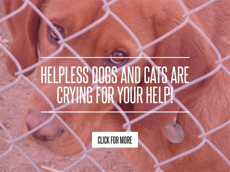 Helpless Dogs And Cats Are For Your Help by Helpless Dogs And Cats Are For Your Help Lifestyle