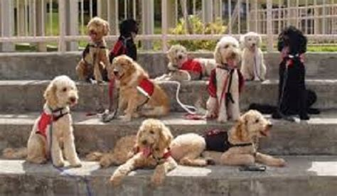 autism therapy dogs islam therapy dogs and autism in search of a constant companion