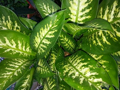 foliage plants names my gardening house info
