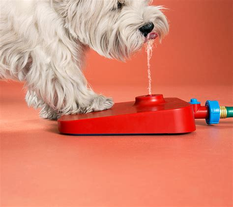 pawcet  drinking fountain   dog