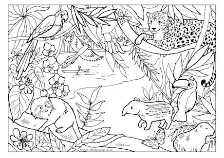 printable coloring pages rainforest animals rainforest colouring page