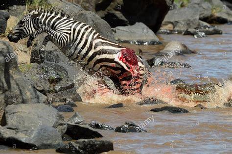 krokodil images crocodile wallpapers hd backgrounds