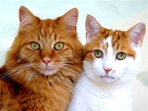 Karpet Bulu Kucing misteri mata kucing bersinar dalam gelap quot ilmu itu