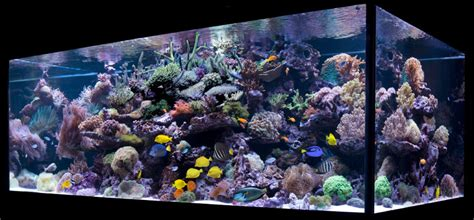 on the rocks how to build a saltwater aquarium reefscape live rock is the foundation of the reef aquarium algone