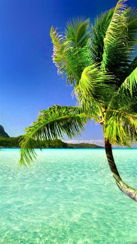palm tree wallpaper palm trees wallpapers 84
