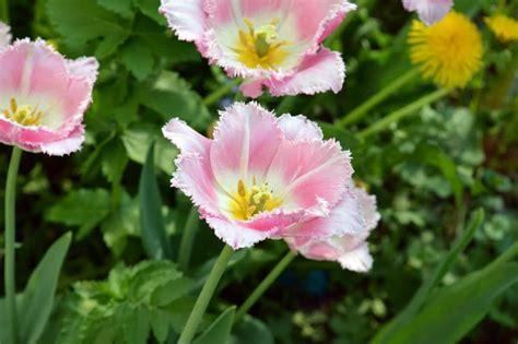 Garten Pflanzen Sommer by Kostenlose Bild Flora Natur Garten Sommer Blatt