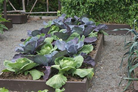 vegetable gardening  home gardens gardening