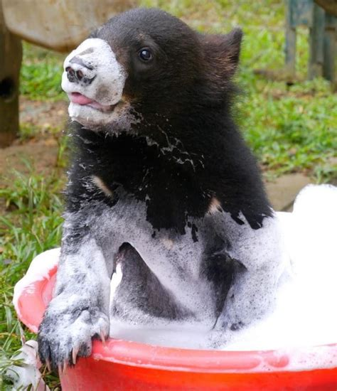 bear in a bathtub she was snatched from her loving mama where she is now