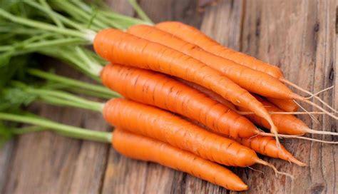 ricette per cucinare le carote come cucinare le carote ricette con carote facili e veloci