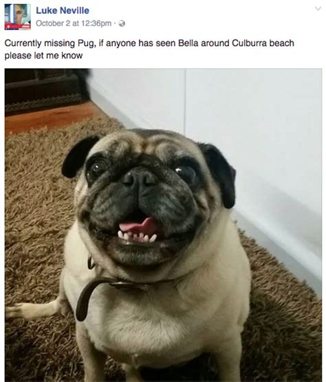 lost pug friend returns his lost pug but when he pets she seems strange
