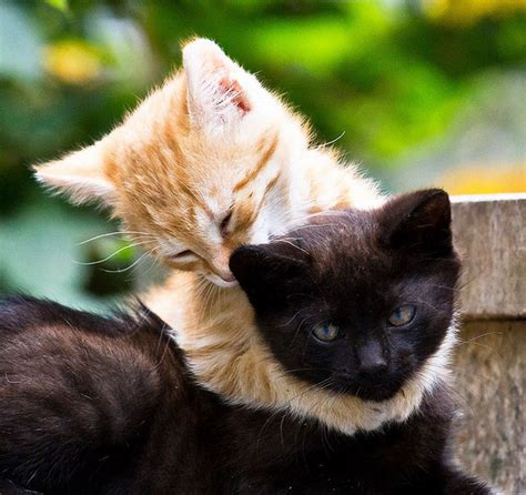 Make Your Day Cutest Pets by Animals Hugging 24 45 Irresistibly Photos Of