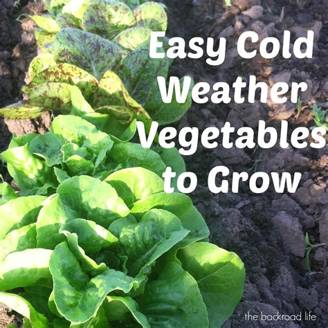 the backroad life easy cold weather vegetables to grow