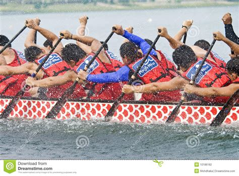 dragon boat racing muscles pacific west dragon boat race paddlers editorial