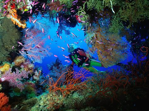 dive the world travel world best diving rtw travel itinerary