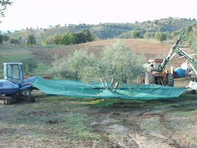 tende per raccolta olive ombrello intercettatore rovescio per olive macchine e