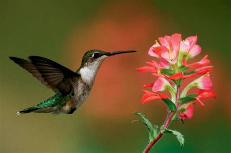 a haven for hummingbirds illinois farm bureau partners