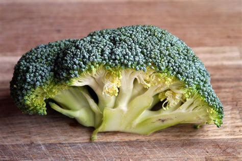 vegetables bad for dogs what vegetables can dogs eat list of and bad