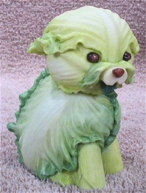 cabbage for dogs cabbage food