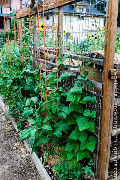 Vertical Gardening Trellis Ideas Bean Trellis Built Along The Back Of Compost Bins