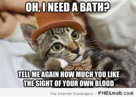 Bath Meme - cat memes a hilarious cat pictures gallery pmslweb