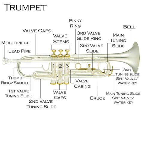 trumpet diagram miss jacobson s scales and charts for