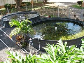 Backyard Tilapia Aquaponics 5 Things I Learned While Attempting Backyard Aquaculture