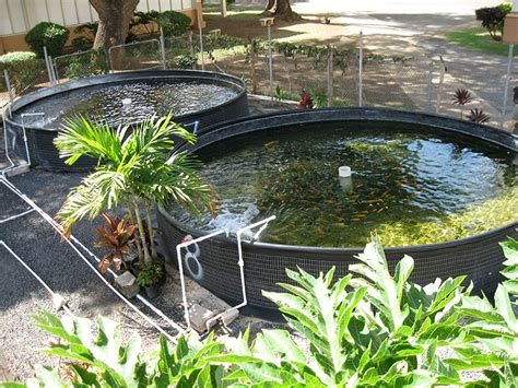 home aquaculture backyard fish farming 5 things i learned while attempting backyard aquaculture