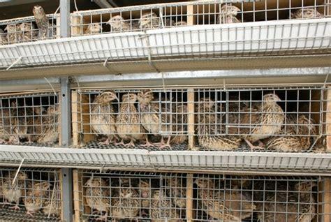 Nesting Panci Cing By Den vagtler et sp 230 ndende alternativ til k 248 d og 230 g