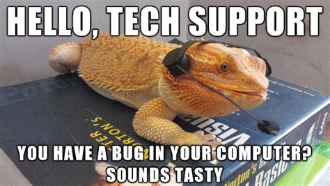 Bearded Dragon Meme - 30 bearded dragon memes to make you smile animalpages